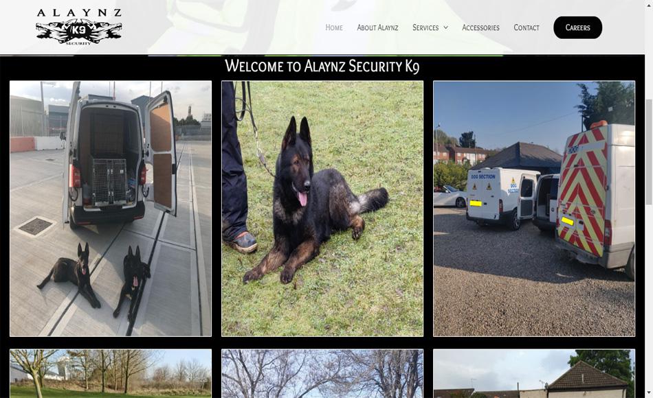 Alaynz Security Main 950x580